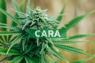Cara Therapeutics Reports Second Quarter 2019 Financial Results