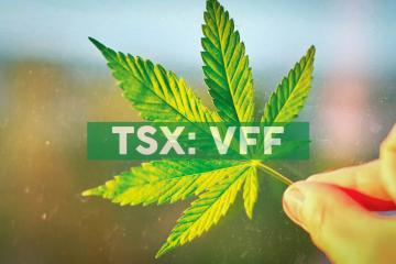 Village Farms International to Present at Scotiabank Cannabis Company Forum in Sydney, Australia