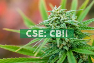 CB2 Insights Announces Appointment of Medical Director in Colombia and Enters Market with Cannabis Research Focus