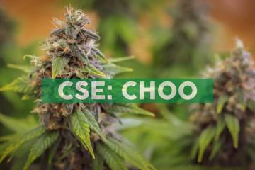 Choom-branded Cannabis Retail Store Licensed to Open in Drumheller, Alberta