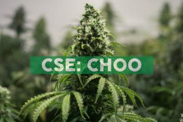 Choom-branded Cannabis Retail Store Licensed to Open in Westlock, Alberta