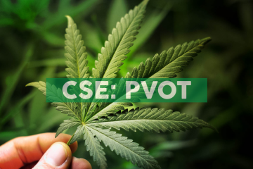 PIVOT responds to Stockwatch Article on Notice of Claim filed by Aly Ismail