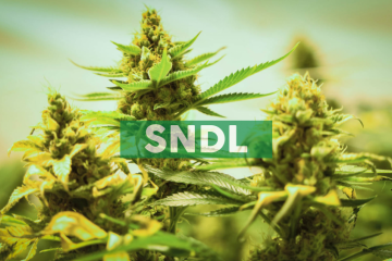 Sundial Introduces Palmetto: The Handy Cannabis