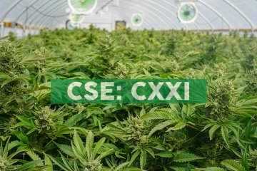 C21 Investments Receives Regulatory Approval for Transfer of Phantom Farms' Oregon Licenses