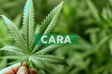 Cara Therapeutics Announces Presentations at Kidney Week 2019