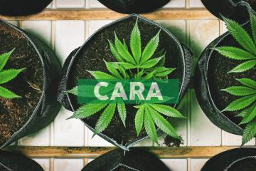 Cara Therapeutics Reports Third Quarter 2019 Financial Results