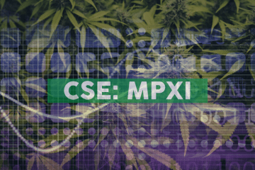 MPX International Establishing Cannabis Joint Venture in South Africa
