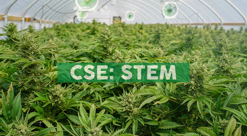 Stem Holdings Inc. collaboration to bring hand-crafted, CBD hemp beverages to the market
