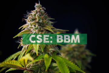 Blueberries Medical Commences Formal Development Process for the Cultivation of Cannabis in Jujuy Argentina