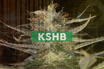 KushCo Holdings Expands CBD Footprint with Launch of New Hemp Trading Business