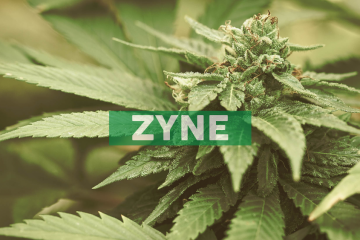 Zynerba Pharmaceuticals Receives New U.S. Patent for Treatment of Fragile X Syndrome with Transdermal Cannabidiol