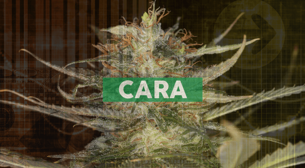 Cara Therapeutics Announces Equity Grants to Employees Under Inducement Plan