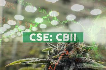 CB2 Insights Launches Warrant Incentive Program