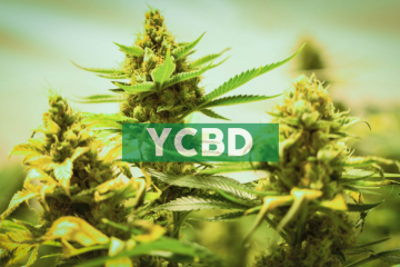 CbdMD, Inc. To Host Conference Call To Discuss Fiscal 2019 Results