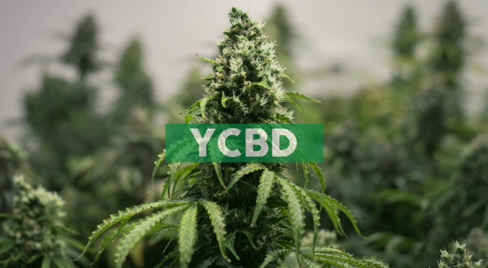 CbdMD, Inc. Announces Timing of Regular Monthly Dividend for January 2020 for 8.0% Series A Cumulative Convertible Preferred Stock