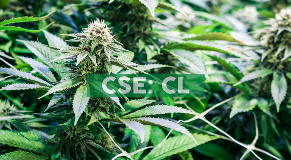 Cresco Labs Announces the Opening of Its First Five Sunnyside* Dispensaries and the Launch of Sunnyside.shop in Preparation for First Day of Adult-Use Cannabis Sales in Illinois