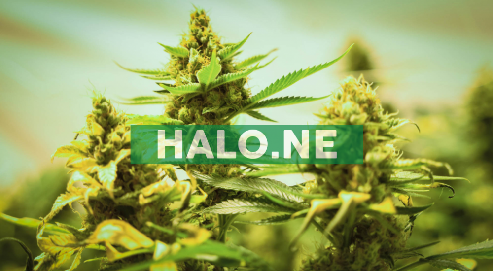 Halo Enters Into Binding LOI To Acquire Canmart Limited (UK) Licensed UK Importer and Distributor of Medical Cannabis Products