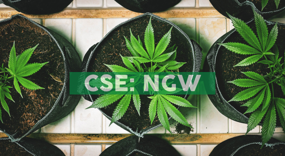 Next Green Wave's Brand House SDC and The FADER Unveil Exclusive Cannabis Partnership
