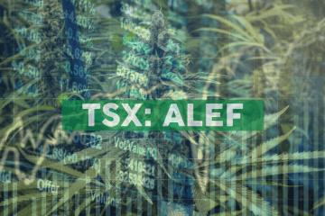 Aleafia Health Completes $7.1M Cannabis Sale Agreement
