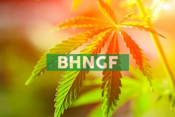 Bhang Inc. Announces New Chair of the Board; Issues Shares to Service Providers
