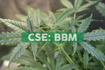 Why Major Cannabis Companies Just Beginning to Expand in Latin America
