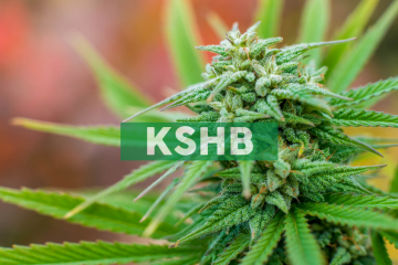 KushCo Holdings Names HeavenlyRx, B GREAT, Maye, and Level Select as Next Four CBD Brand Partners Under its Retail Services Partnership with C.A. Fortune