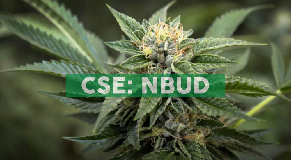 North Bud Farms Announces Management Change and Corporate Update