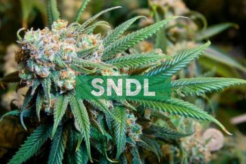 Sundial and Vir Pharmaceuticals Sign Medical Cannabis Supply Agreement for Australian Chronic Pain Clinical Studies