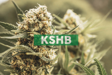 KushCo Holdings Sets January 2020 Financial Conference Schedule