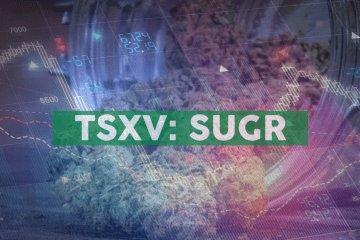 Sugarbud Announces Option Grant