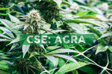 AgraFlora Engages Seasoned Cannabis Executive to Drive Asset Commercialization and Shareholder Value Creation
