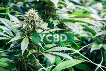 CbdMD, Inc. To Host Conference Call To Discuss First Quarter 2020 Results