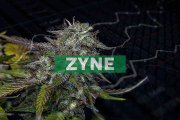 Zynerba Pharmaceuticals Announces Presentations at the American Society for Experimental Neurotherapeutics (ASENT) 2020 Annual Meeting
