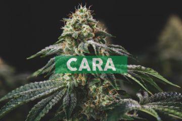 Cara Therapeutics Reports Clinical Updates