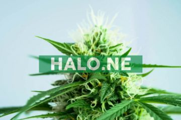 Halo Labs Announces Launch of Pilot Distillate Remediation Program and Re-Opening of Bulk Distillate Manufacturing in Cathedral City