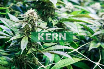 Akerna Flash Report: Gin Beats Tequila and Cannabis Sales Surpass Them Both