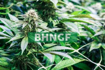 Bhang Provides Corporate Update