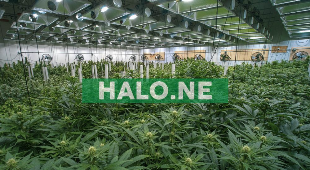 Halo Labs Inc