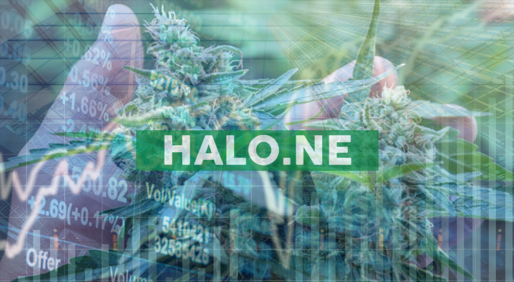 Halo Labs Stock