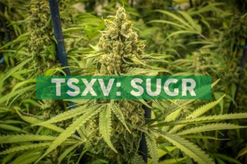 Sugarbud Announces Wholesale Distribution and Supply Agreement for the Province of Saskatchewan with National Cannabis Distribution
