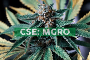 MustGrow Announces Issuance of Options and Warrants
