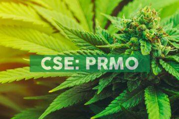 Primo Nutraceuticals Announces No Material Change