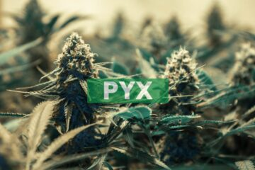Pyxus International, Inc. Receives Delisting Notice from the New York Stock Exchange