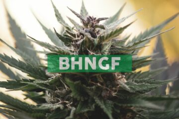 Bhang Announces Debt Settlement and New Credit Facility with Cannabis Growth Opportunity Corporation