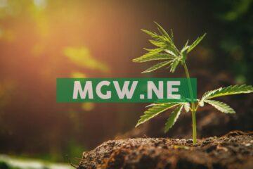 Maple Leaf Green World Inc. Commences First La Crème CBG Harvest