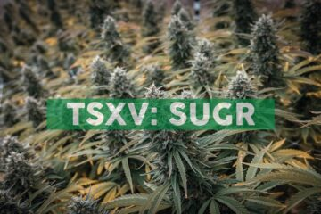 Sugarbud Announces Launch of Pre-Roll Products