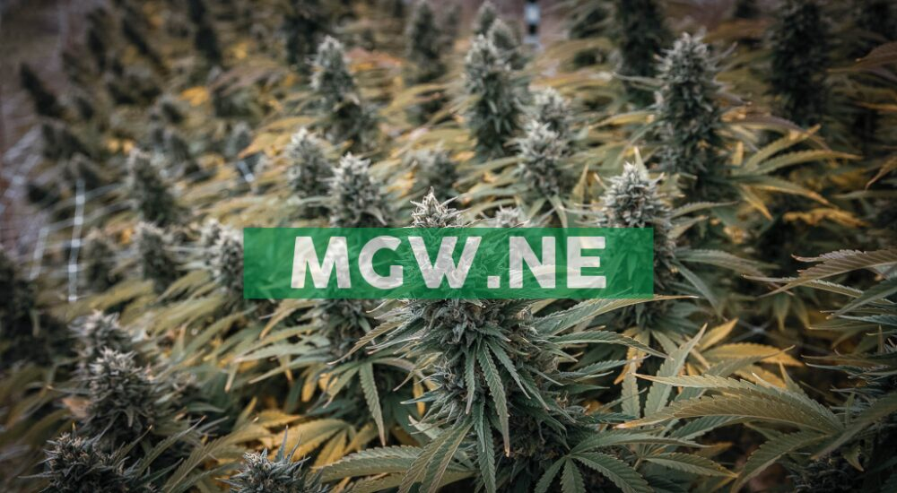 Maple Leaf Green World Inc. Receives California Department of Food & Agriculture Approval To Sell Its CBG Hemp Products.