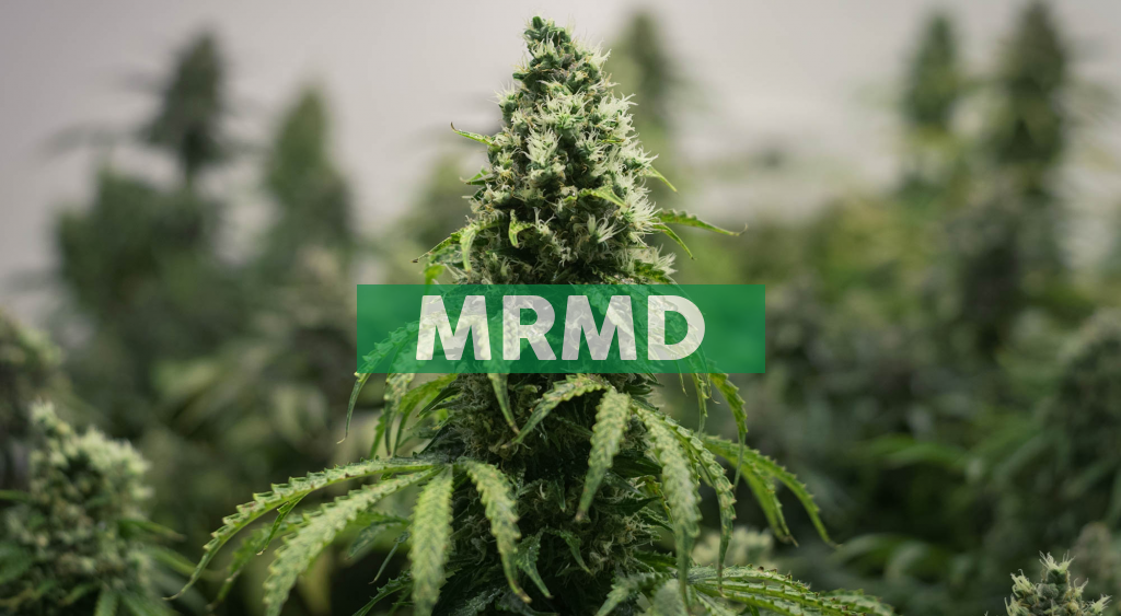 MariMed's CEO to Participate in Fireside Chat at the Benzinga Virtual Cannabis Capital Conference on October 15th