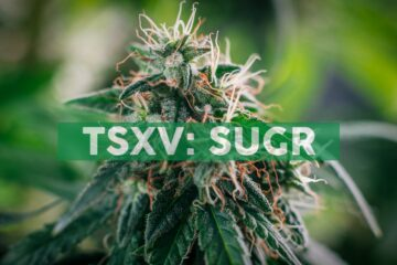 Sugarbud Announces First Purchase Orders From Alberta Gaming, Liquor & Cannabis