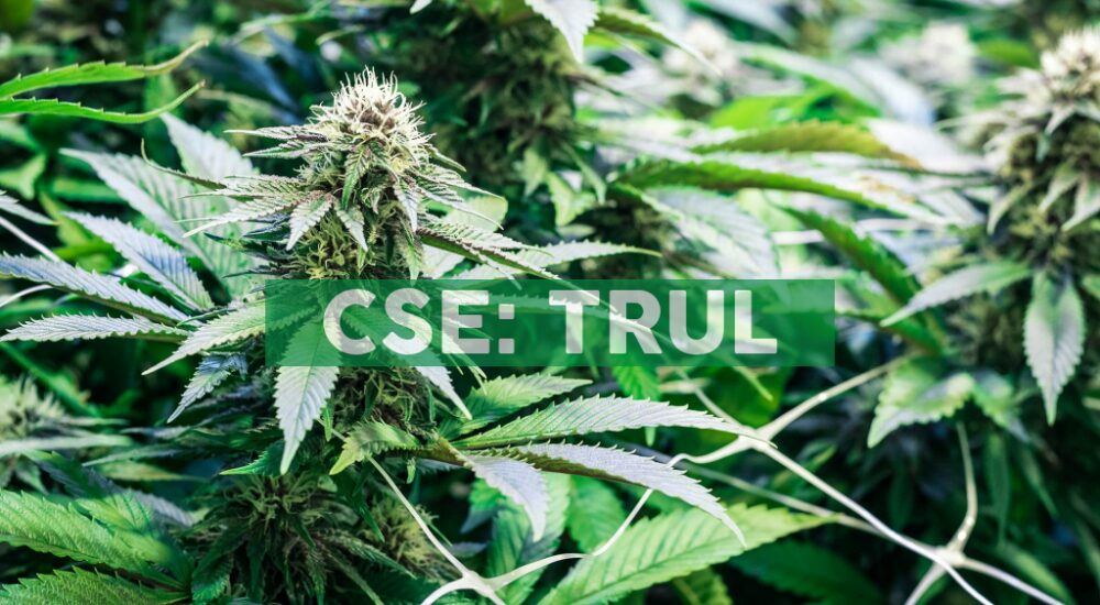 Trulieve Launches the Cultivar Collection, a Curated Collection of Premium Flower Strains
